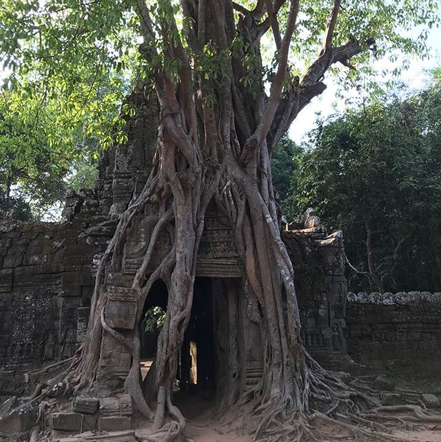 La vie est douce au Cambodge... • • • #holidays #zenitude #magicplace #cambodia #loindeparis