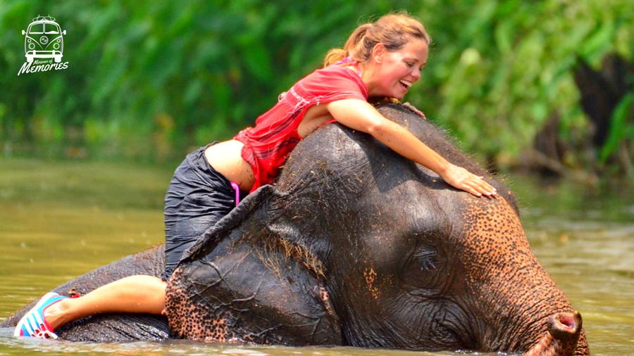Thailandese Elephant Sanctuary - Tammie Figlinski