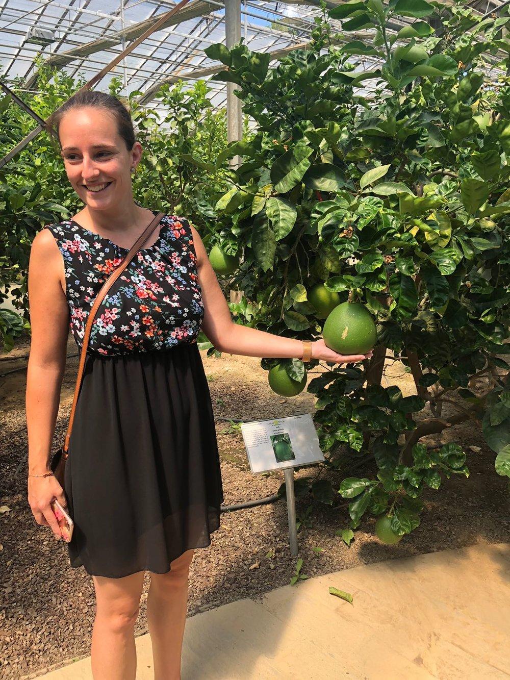 citrus garden.JPG