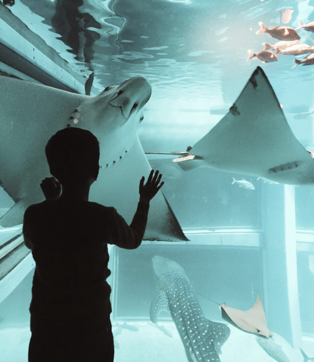 Osaka aquarium.png