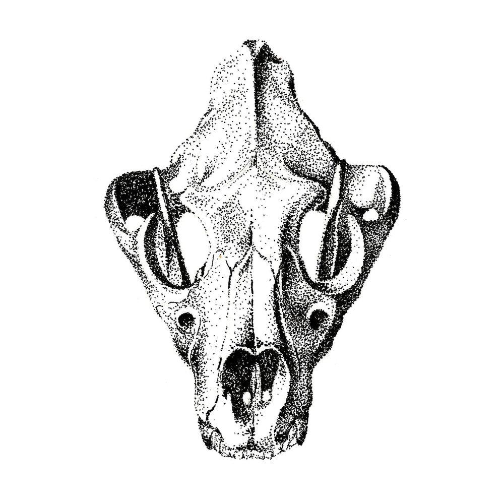 animal3.jpg