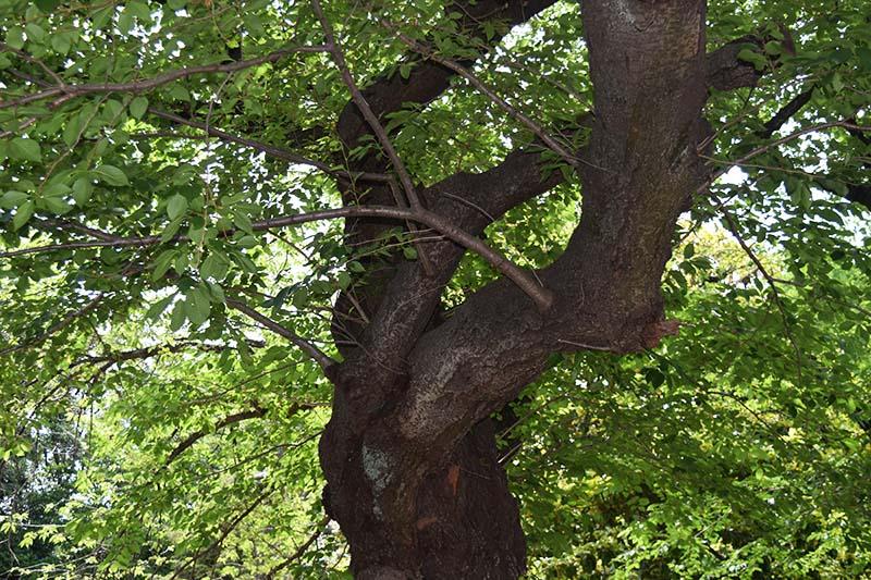 Original-tree.jpg