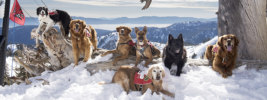Squaw Valley dogs