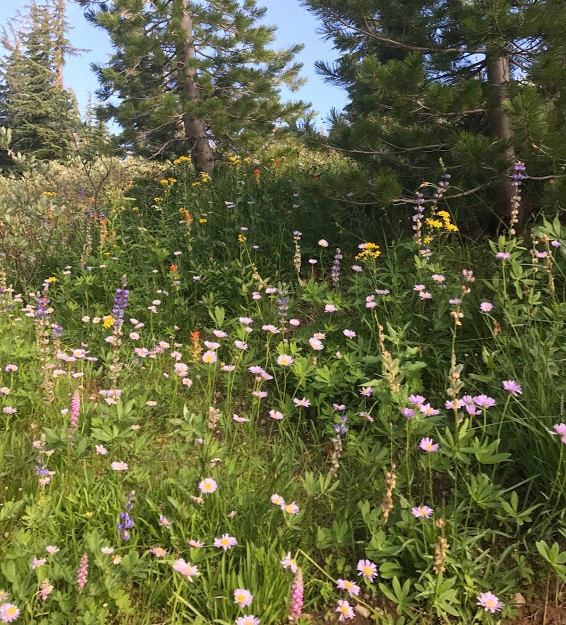 Different types of wildflowers mingling in the meadows