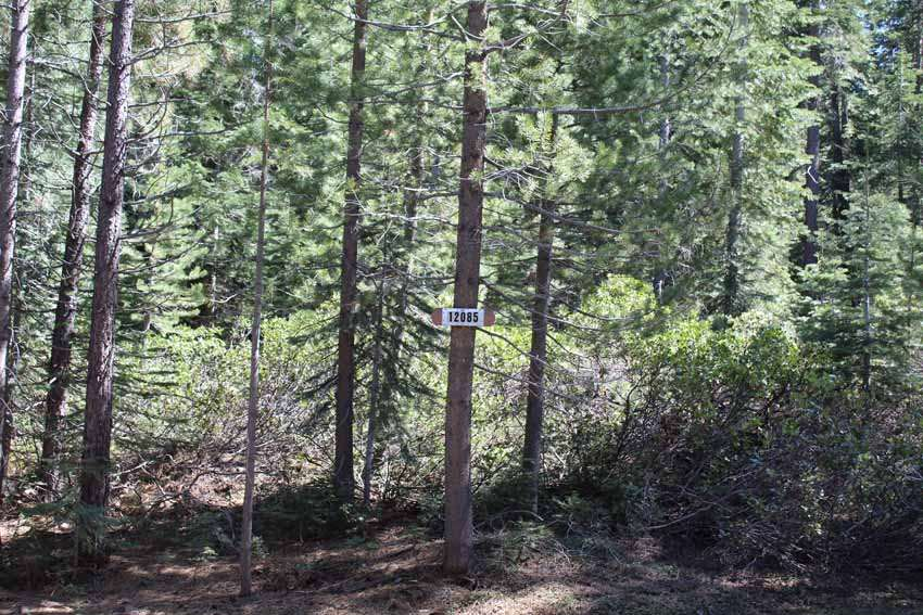 OFF THE MARKET: High End Lot in Truckee
