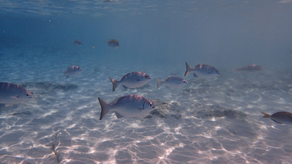 fish-1733504_960_720.jpg