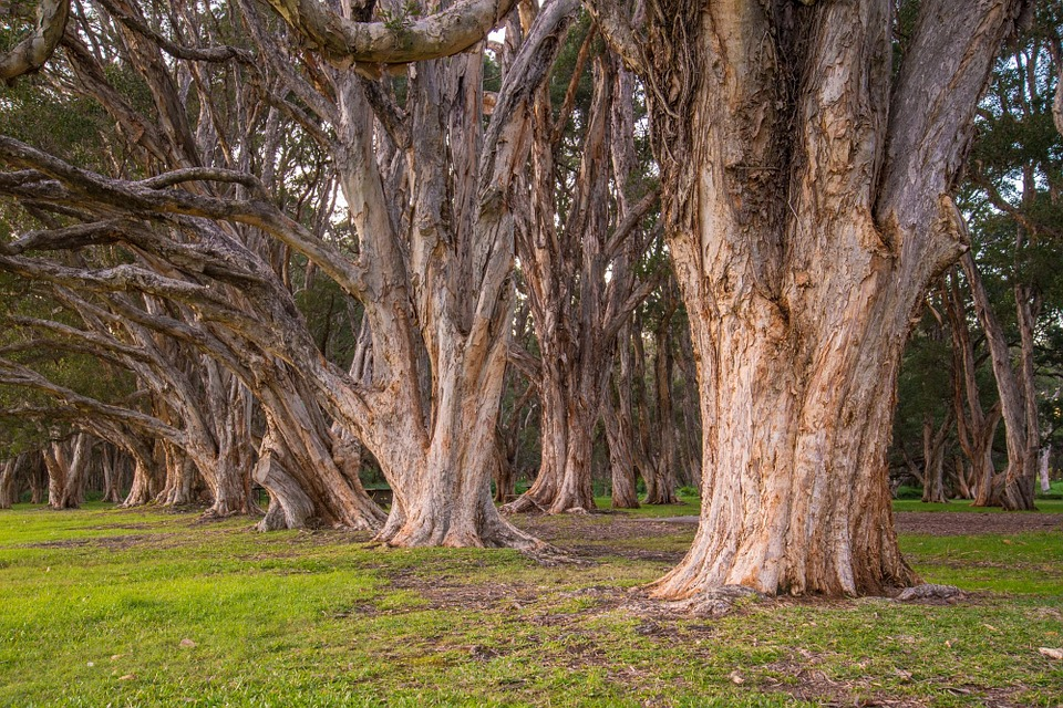 trees-340750_960_720.jpg