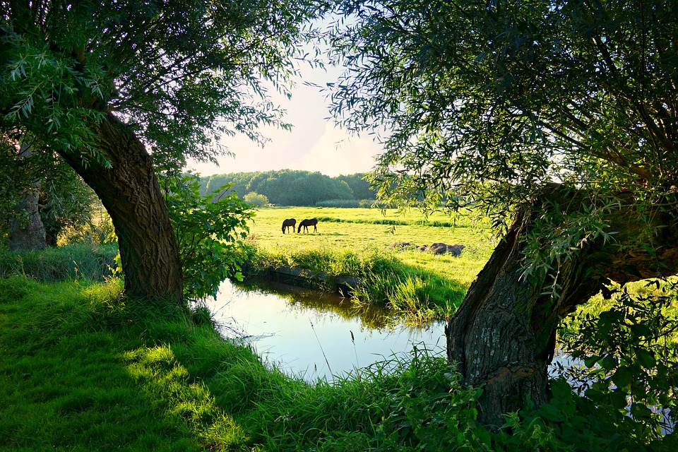 holland-1606783_960_720.jpg