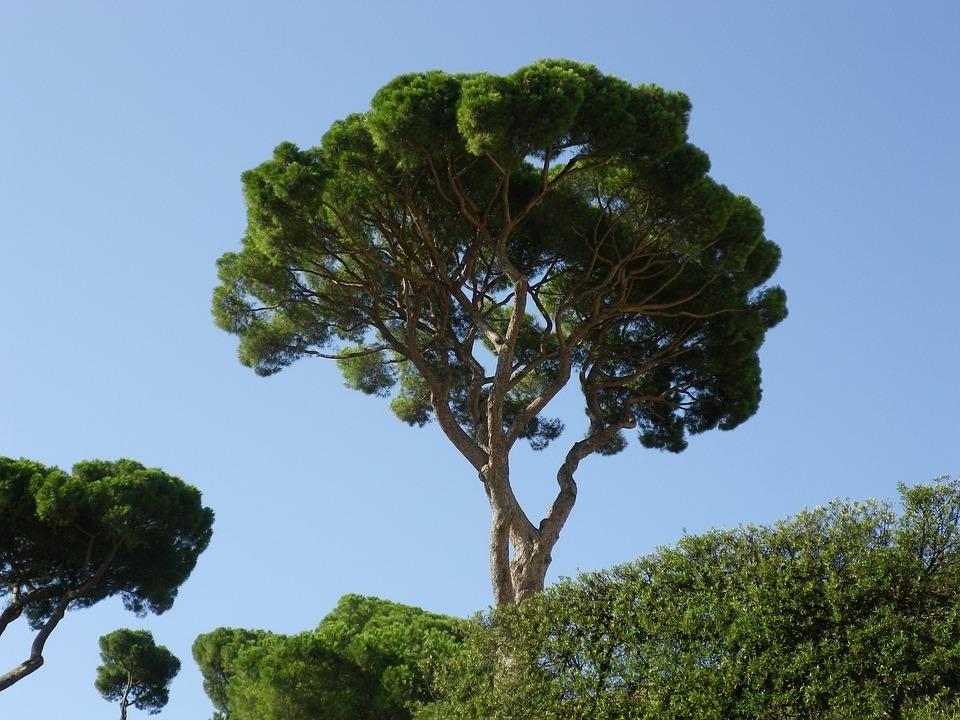 trees-1263290_960_720.jpg