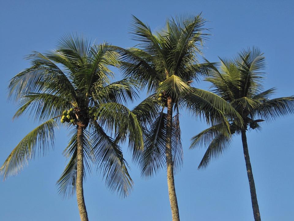royal-palms-1225858_960_720.jpg