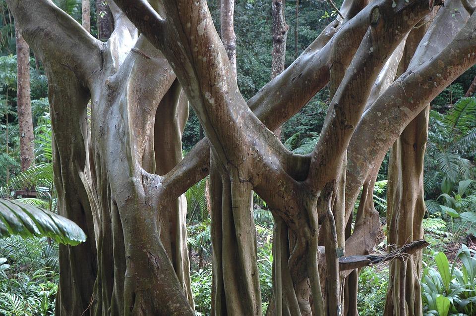 jungle-166293_960_720.jpg