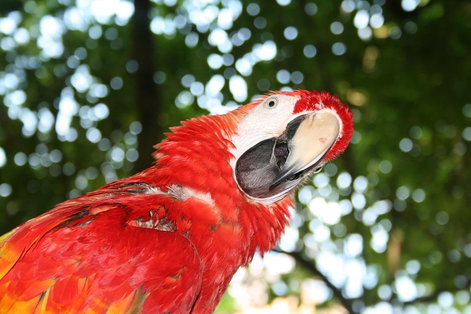 parrot-1070624_960_720.jpg
