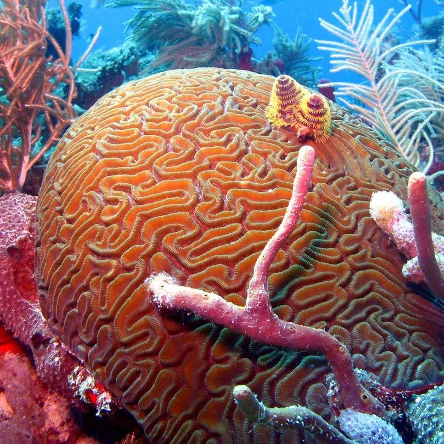 Coral-1.jpg