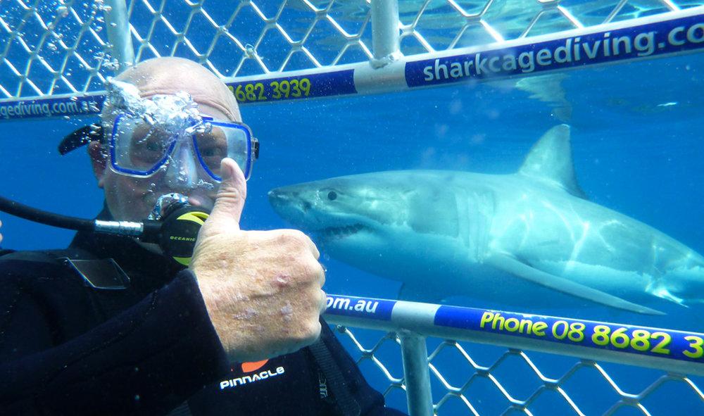 Shark-cage-diving.jpg