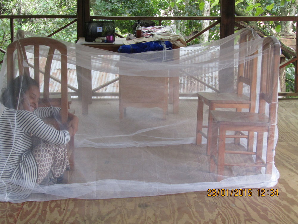 Mosquito net sequence