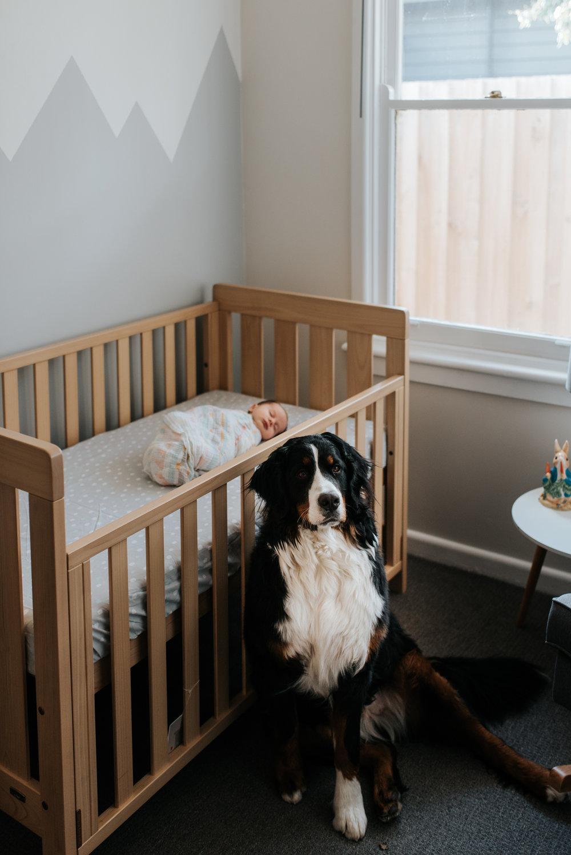 newborn photographer in melbourne