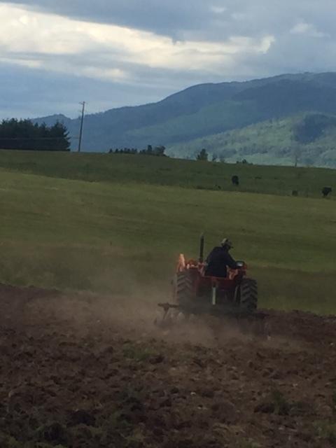 Matthew disking the barley field