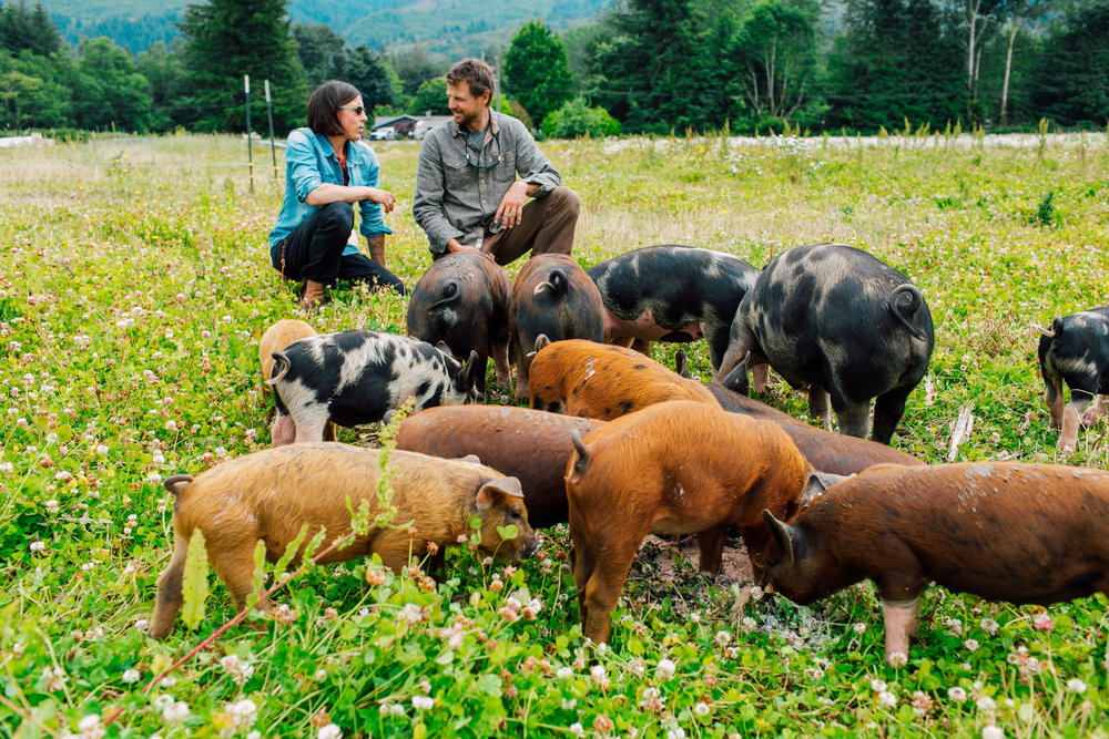 Katie and Matthew and our first pigs on the new farm in July 2018.