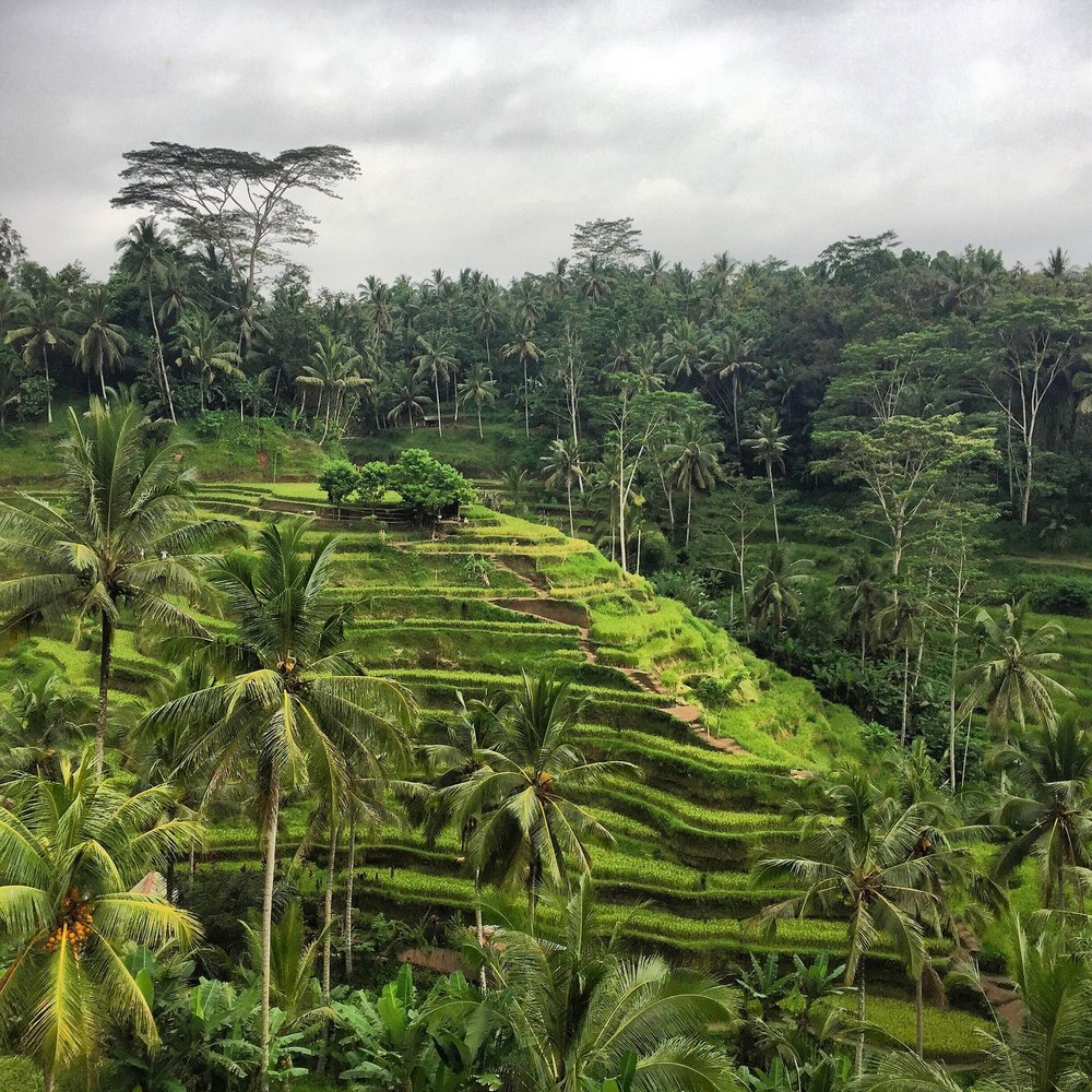 the-remote-experience-tegalalang-terrace-ubud.jpg
