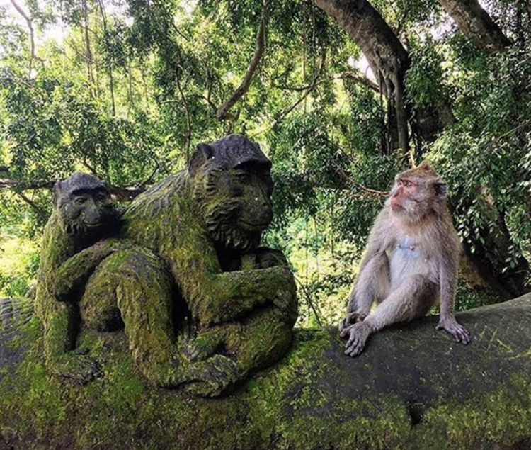 the-remote-experience-ubud-bali-monkey-forest.png
