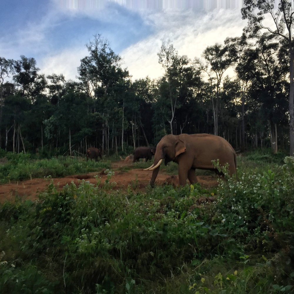 the-remote-experience-chiang-mai-thailand-elephant-jungle-sanctuary.jpg