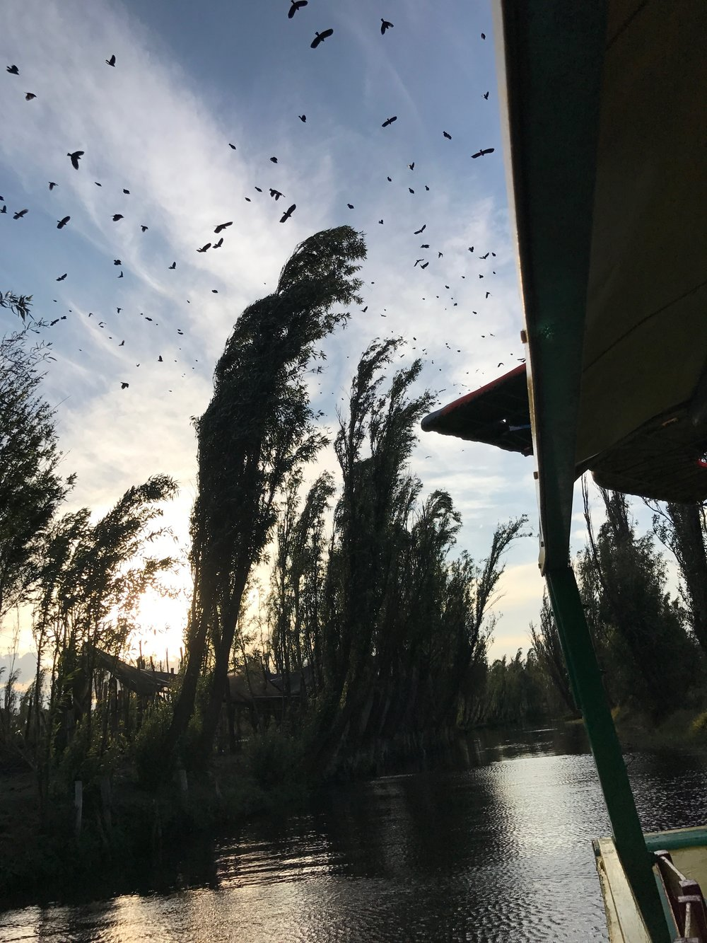 The-Remote-Experience-Work-Travel-Program-Xochimilco-Birds.jpg