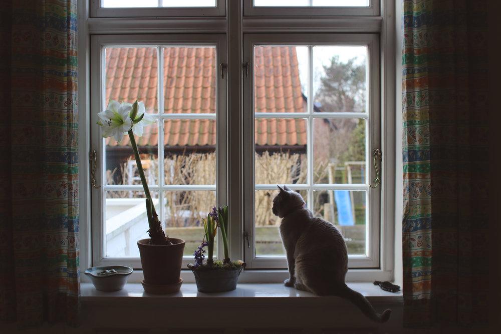 SP17_Relaxing at home_Copenhagen_Ashley Miller_01.JPG