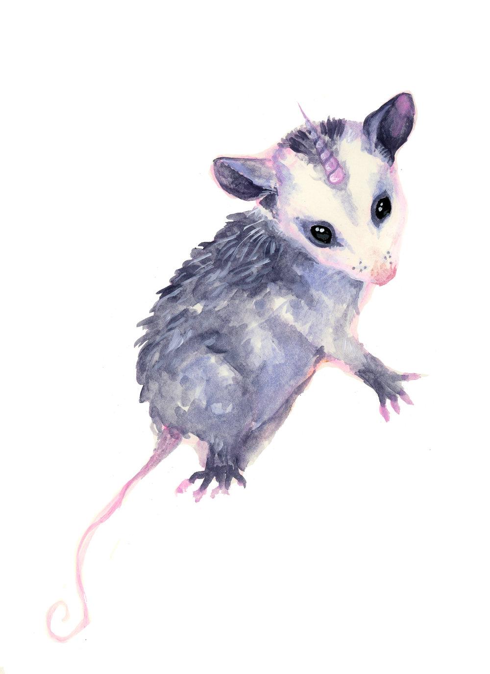 opossumcorn.jpg