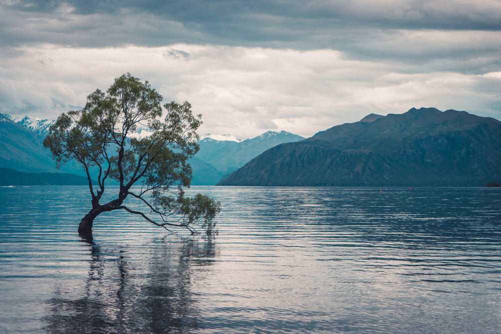Lone Tree of Lake Wanaka - Framed by the Southern Alps, the lone tree is a willow tree in the middle of the lake that grew from a hacked off branch from nearby willows. A symbol of determination?