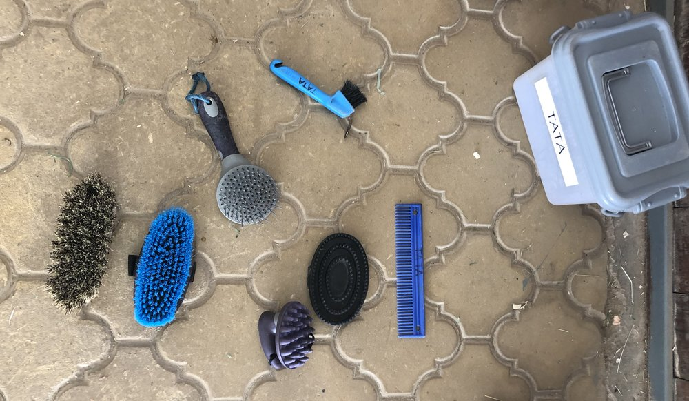 A variety of tools used to groom horses.