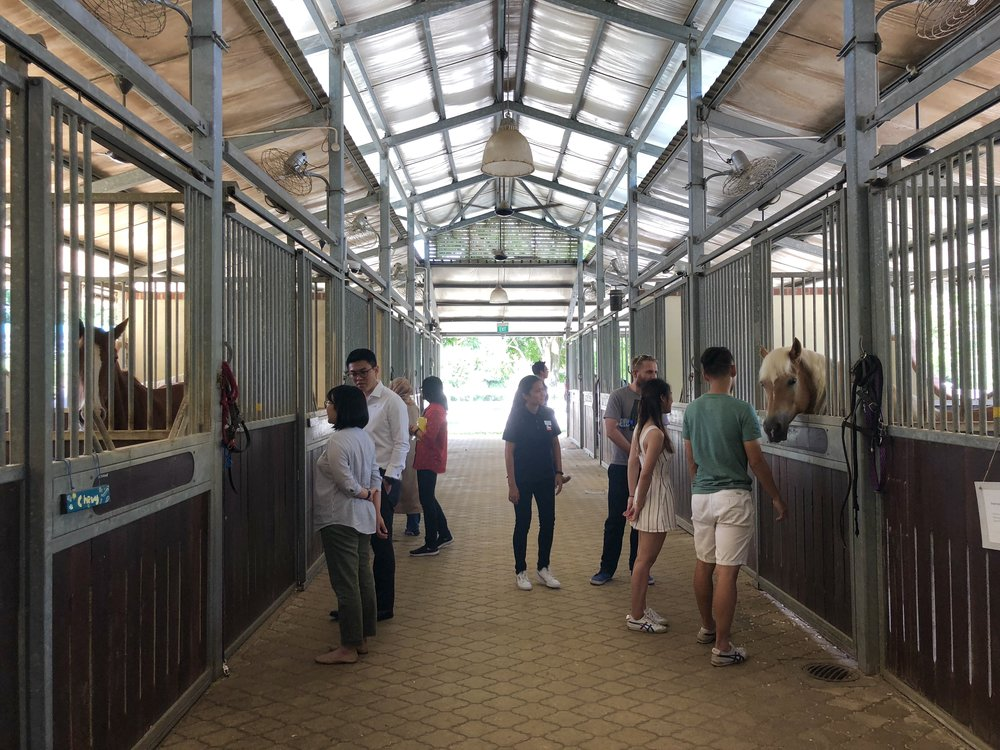 """Heist headed to the stables for the workshop """"The Great Outdoors of Design - Redesigning Care with Horses and Caregivers."""""""