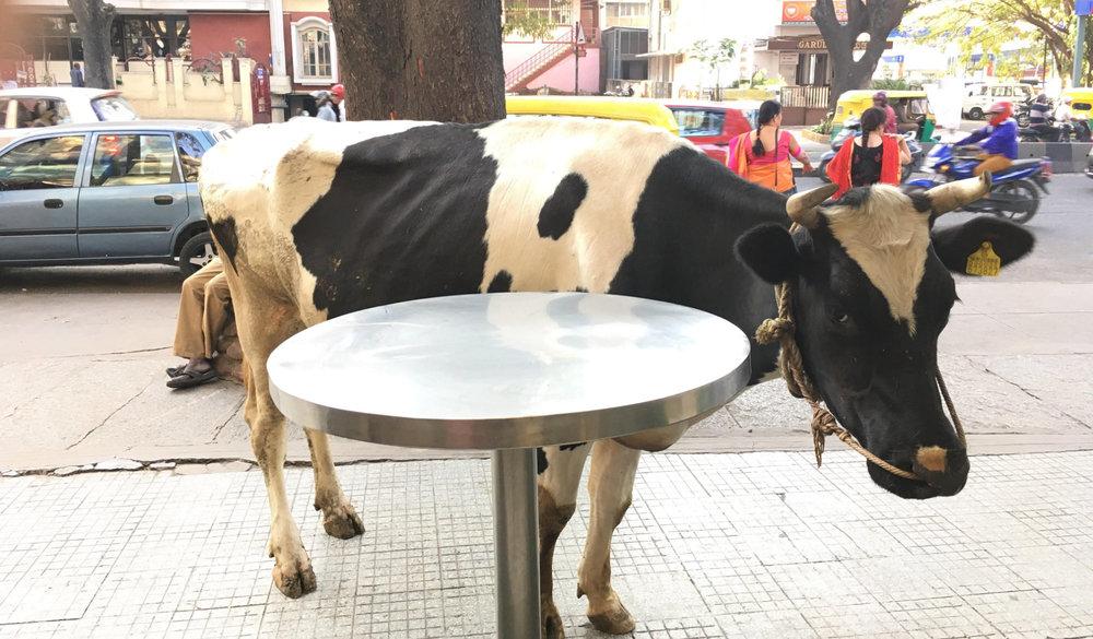 Cow-Bangalore.jpg