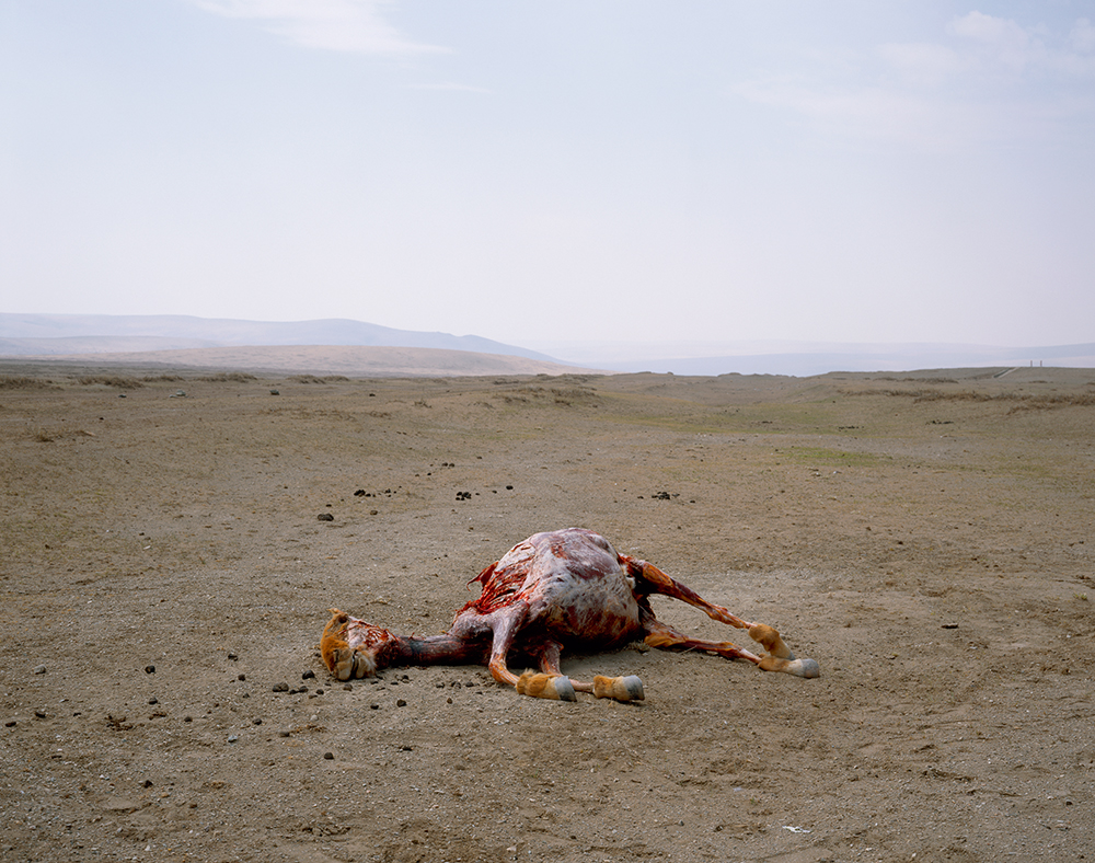 2003,-SKINNED-HORSE_web.jpg
