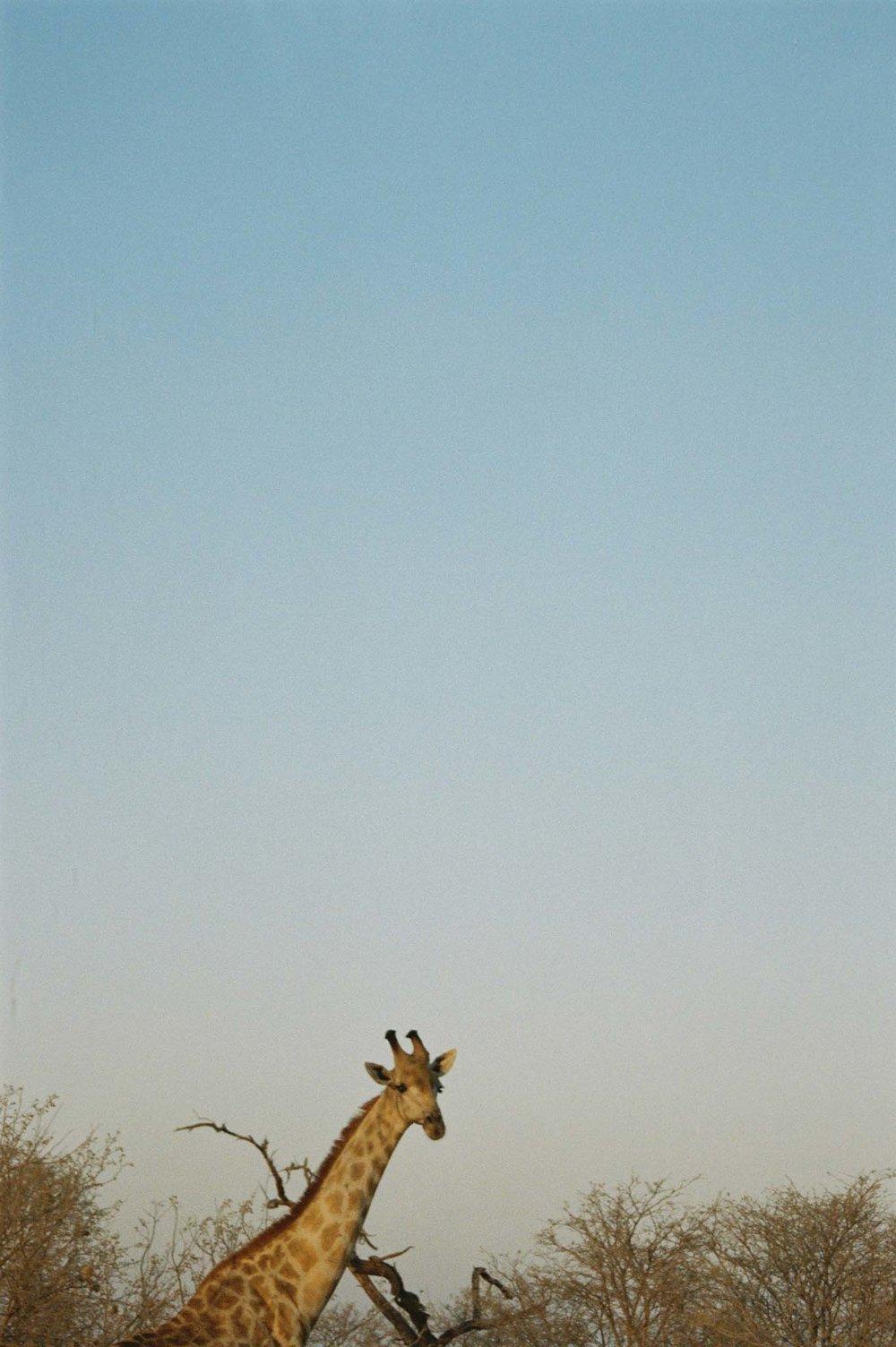 Africa_8339_13.jpg