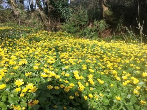 My wild and wonderful back garden.