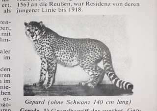 H.P. Feldmann, Lexikonbild