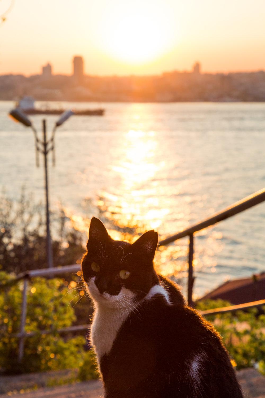 istanbul-166.jpg