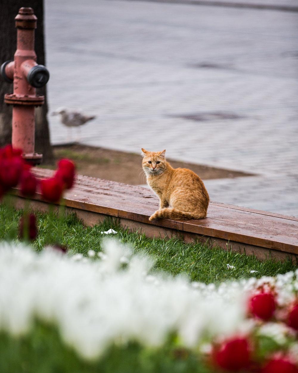 istanbul-86.jpg