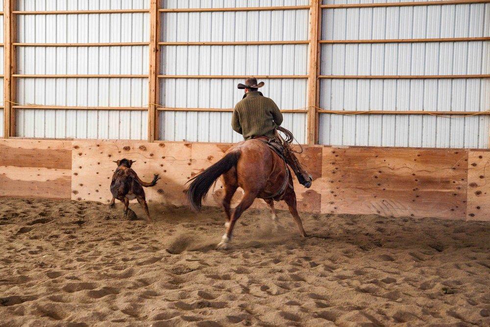 Real Ranch Horses, Rawhide Quarter Horses in Billings Montana