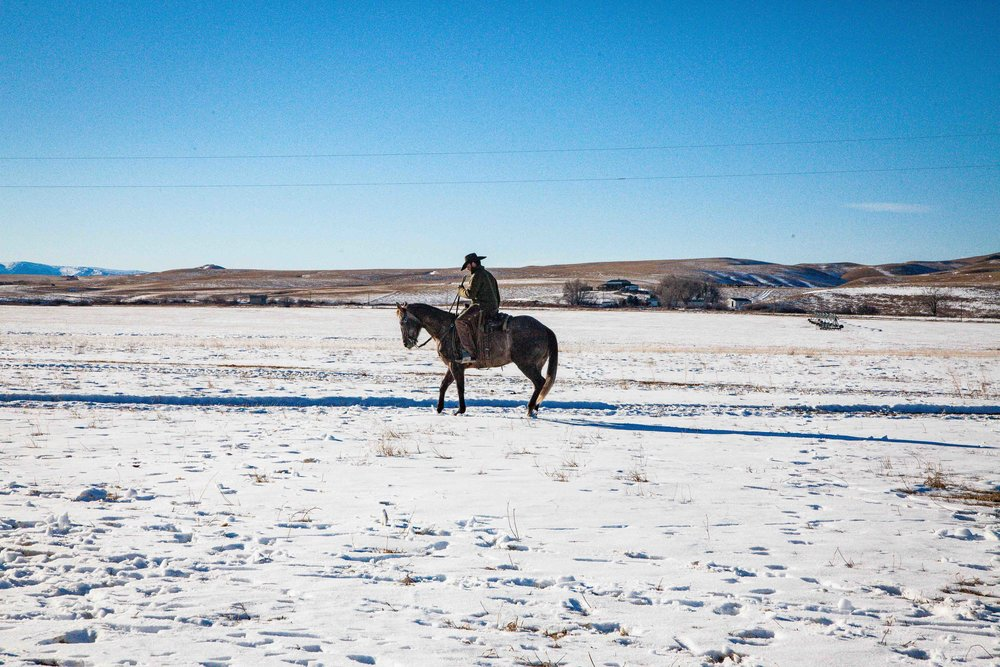 Rawhide Quarter Horses by Kerns Photography in Sheridan Wyoming