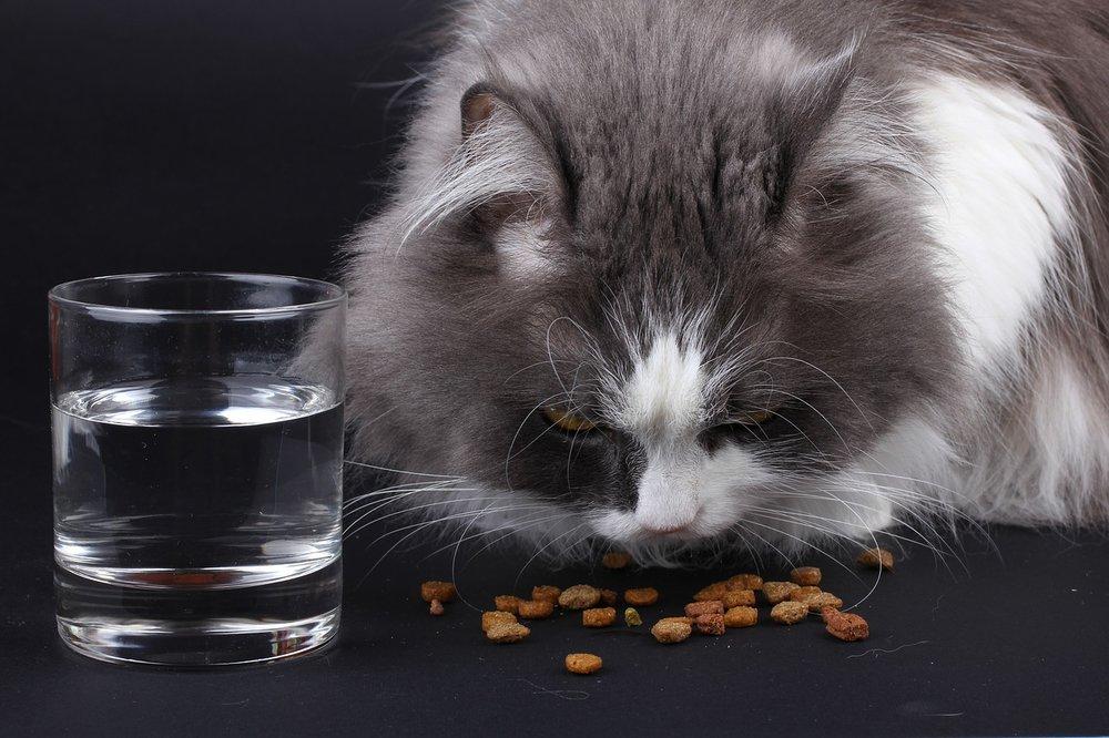 cat food.jpg