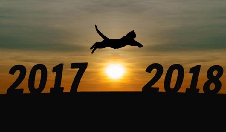 JUMPING CAT.jpg
