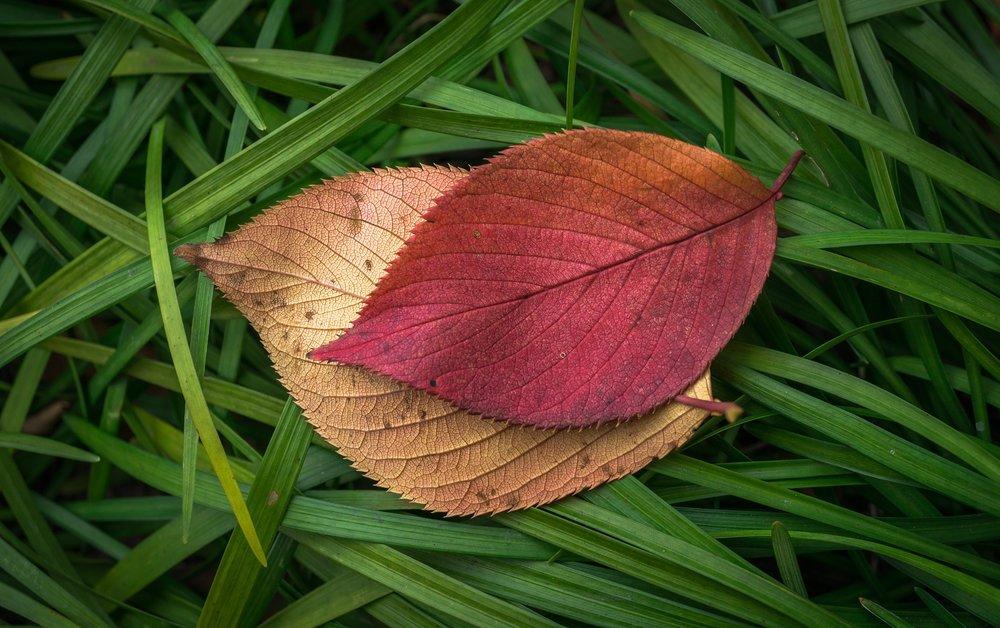 leaves-1821181_1920.jpg