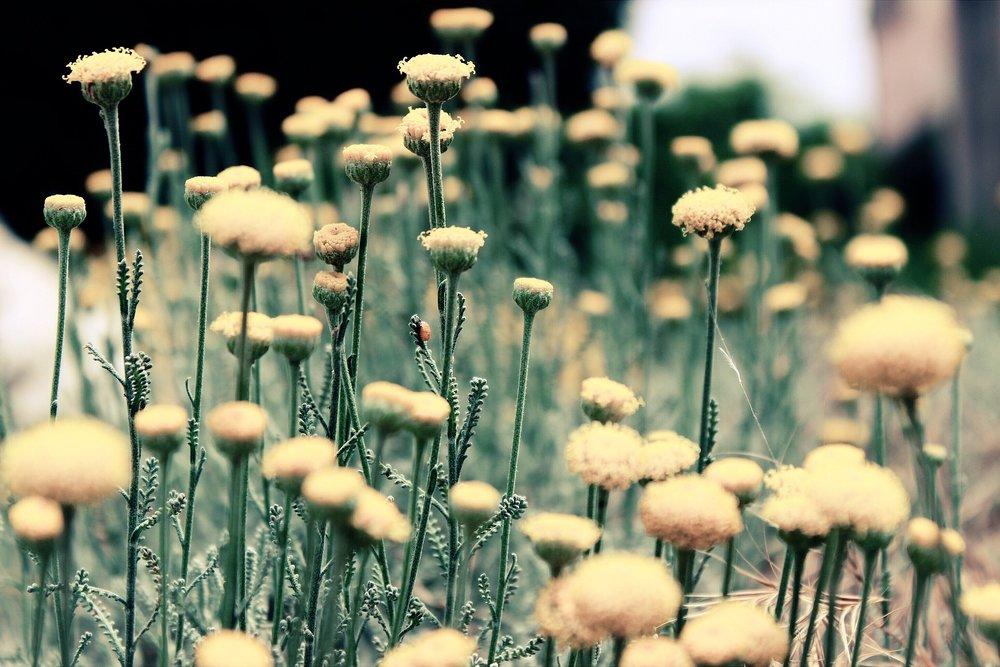 flowers-801859_1920.jpg