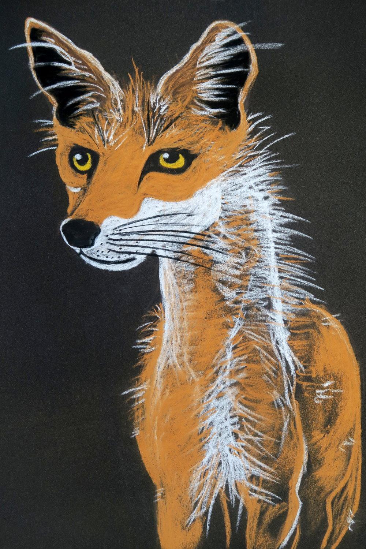Surprised Spring Fox Kaisa Kangro 2016