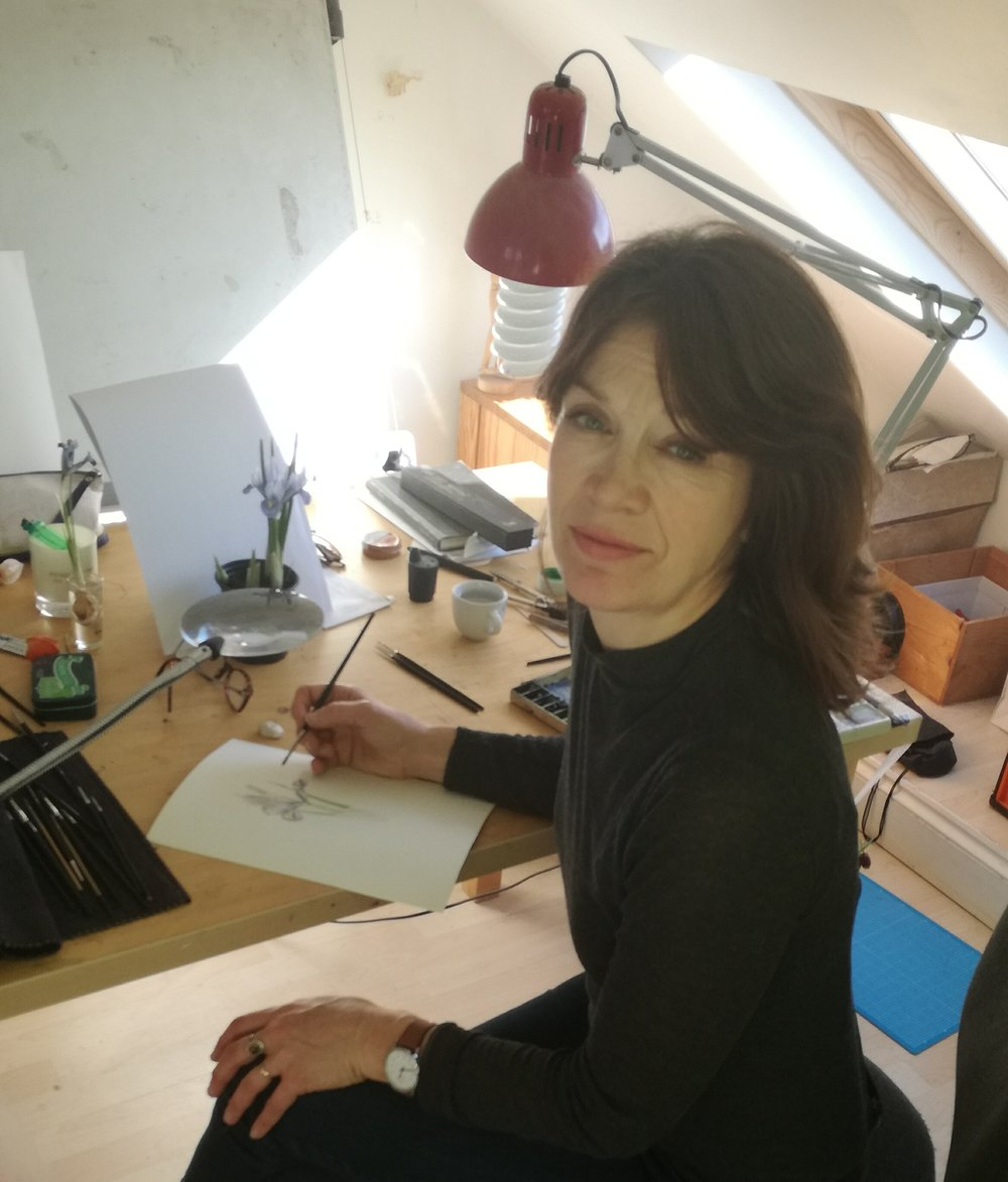 Sarah Peart - Botanical illustrator
