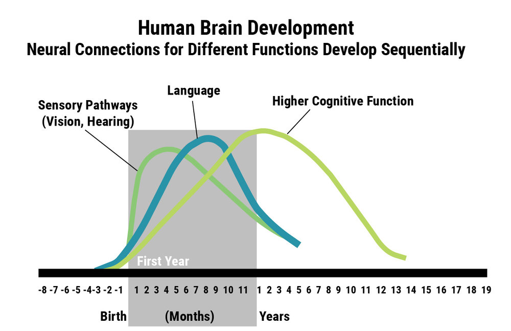 Source: C.A. Nelson (2000). Credit: Center on the Developing Child