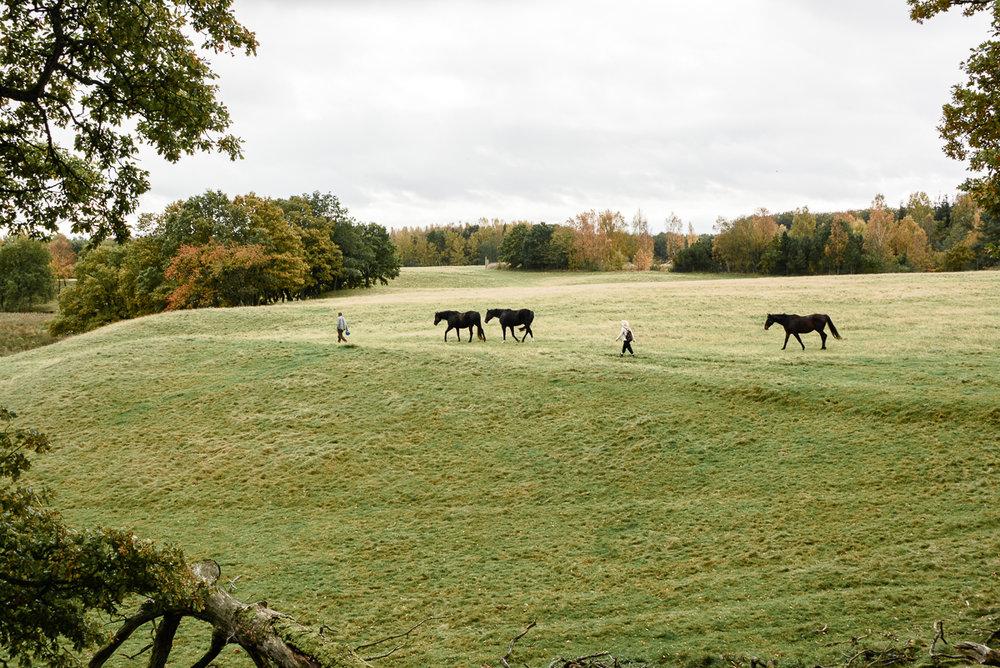 mike og jeg med hestene