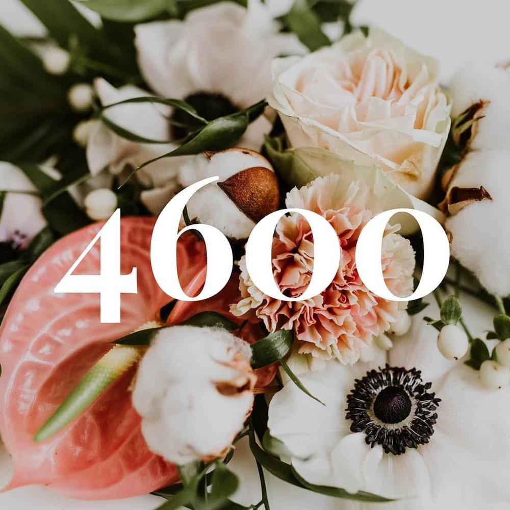 4600.jpg