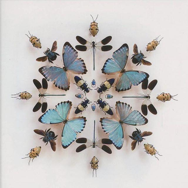 Looking to the original master designer, Mother Nature, for inspiration. #JMHinteriors #JQLYNandCo #designinspo #cabinetofcuriosities . . . . . #curiosities #interiordesigner #designer #colorinspiration #designinspiration #butterflies #moths #beetles #beautiful #pattern #color #wallpaper